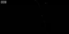 Oceatic Bioluminescence