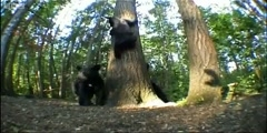 Spy in the Woods meet black bear mother and cubs