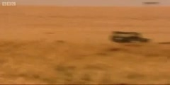 Big Cat Diary, Lion hunts wildebeest