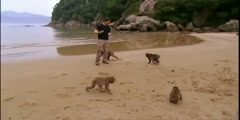 Secret Wilderness fetaures monkey Cuisine in Japan and BBC