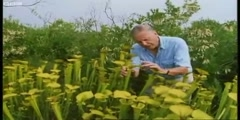Venus Fly Trap  with Attenborough in BBC Earth