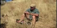 Wild warthog attacks cheetah cub in Cheetahs with BBC Earth