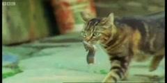 Predators the Killer Kittens