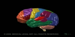 Functions and anatomy of the brain