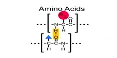 Structural relationship of proteins and amino acids