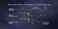 RNA as an Enzyme Lecture part 3