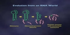 RNA as an Enzyme Lecture part 7