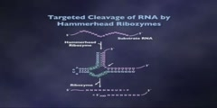 RNA as an enzyme lecture part 8