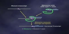 RNA as an Enzyme Lecture part 9