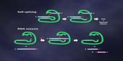 Origins Of Life: RNA as an Enzyme