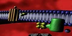 G Protein Receptor Take II