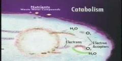 Metabolism - part 2