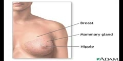 Symptoms of Breast Cancer