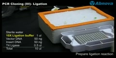 PCR Cloning (III)- Ligation